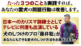 犬のしつけ藤井01.png